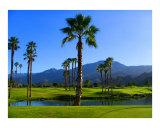 Arnold Palmer Golf Course in PGA West Giclee Print by Vivian Allsopp