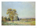 A Summer's Day Giclee Print by Alfred Sisley