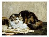 A Tabby Cat, 1920 Print by Charles Van Den Eycken