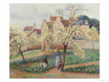 Plum Trees in Blossom Giclee Print by Camille Pissarro