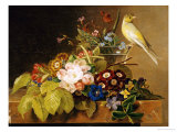 Sweet William, Forget Me Not, Convulvus and a Canary on a Ledge Giclee Print by Johan Laurentz Jensen