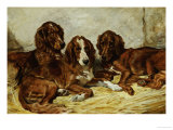 Shot and His Friends, Three Irish Red and White Setters, 1876 Giclee Print by John Emms