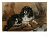 A King Charles Spaniel Poster by Edwin Henry Landseer