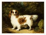 A Blenheim Cavalier King Charles Spaniel Giclee Print by H. Willis