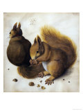 Two Squirrels, One Eating a Hazelnut Giclee Print by Hans Hoffmann