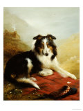 A Collie, the Guardian of the Flock, 1908 Prints by Edwin Douglas