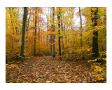 Autumn Stroll in Sapsucker Woods Photographic Print by Michael S Wills