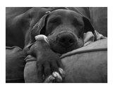Géant endormi Photographie par  TJ Photography