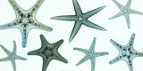Starfish Collection Prints by Steven N. Meyers