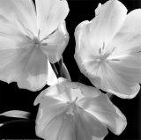 Tulipaner Kunst af Darlene Shiels