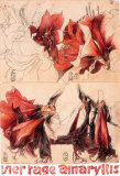 4 Tage Amaryllis Collectable Print by Horst Janssen
