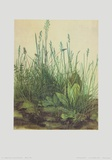 Large Turf Prints by Albrecht D&#252;rer