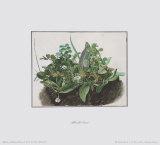 The Small Turf Reproduction pour collectionneur par Albrecht Dürer