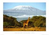 Kimana Area - Kenya Posters by Daryl Balfour