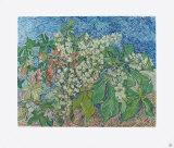 Blossoming Chestnut Branches, 1890  Sammlerdrucke von Vincent van Gogh