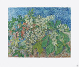 Blossoming Chestnut Branches, c.1890 Collectable Print by Vincent van Gogh