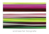 Fotografie II Print by Andreas Feil
