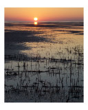 Bush Bay Sunset Photographic Print by Wild Inspirations