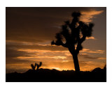 Christopher Harris - Sunrise in Joshua Tree National Park, California Fotografická reprodukce