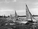 Small Boats Sailing on Sydney Harbor Photographic Print by  Bettmann