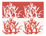 Red & White Coral Photographic Print by Anabella Gebhardt