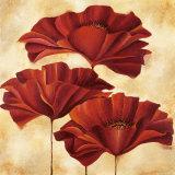 Three Poppies II Art by Nicola Rabbett