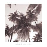 Island Palms Affiches par Michael Kahn