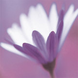 Purple Flower Art by Prades Fabregat