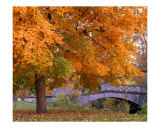Fall and Bridge Photographic Print by Anna Maria Miller