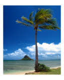 Palm Tree in Kaneohe Bay, Oahu Photographic Print by George Oze