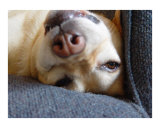 Doggie Upside Down Photographic Print by Florene 
