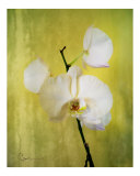 Steel and Orchid Photographic Print by Corrine Ellsworth