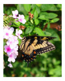 Butterfly Photographic Print by Katherine McColl