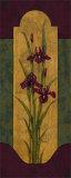 Greek Iris I Posters by Paul Brent