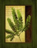 Fern Grotto II Poster by Delphine Corbin