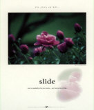 Slide Prints by Francis Pelletier