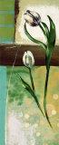 Floral Splendor III Posters by Selina Werbelow