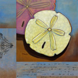 Sanibel Sand Dollar Posters by Paul Brent
