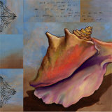 Sanibel Conch Poster by Paul Brent