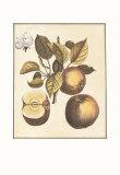French Fruit Plate, Apple Art