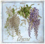 Glycine Prints by Vincent Jeannerot