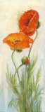 Rembrandt Poppies Prints by Carol Rowan
