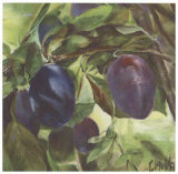 Prunes Prints by Clauva