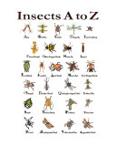 Insects A to Z Photographic Print by Lucy Autrey Autrey Wilson