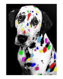 Multi-colored Dalmatian Photographic Print by vincent abbey