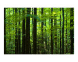 Forest 2 Photographic Print by Frank Tozier