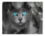 Ol' Blue Eyes Photographic Print by Renee Spade