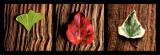Leaves Print by Laurent Pinsard