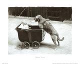 Canine Nurse Posters