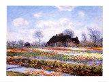Tulip Fields at Sasenheim Affiches par Claude Monet